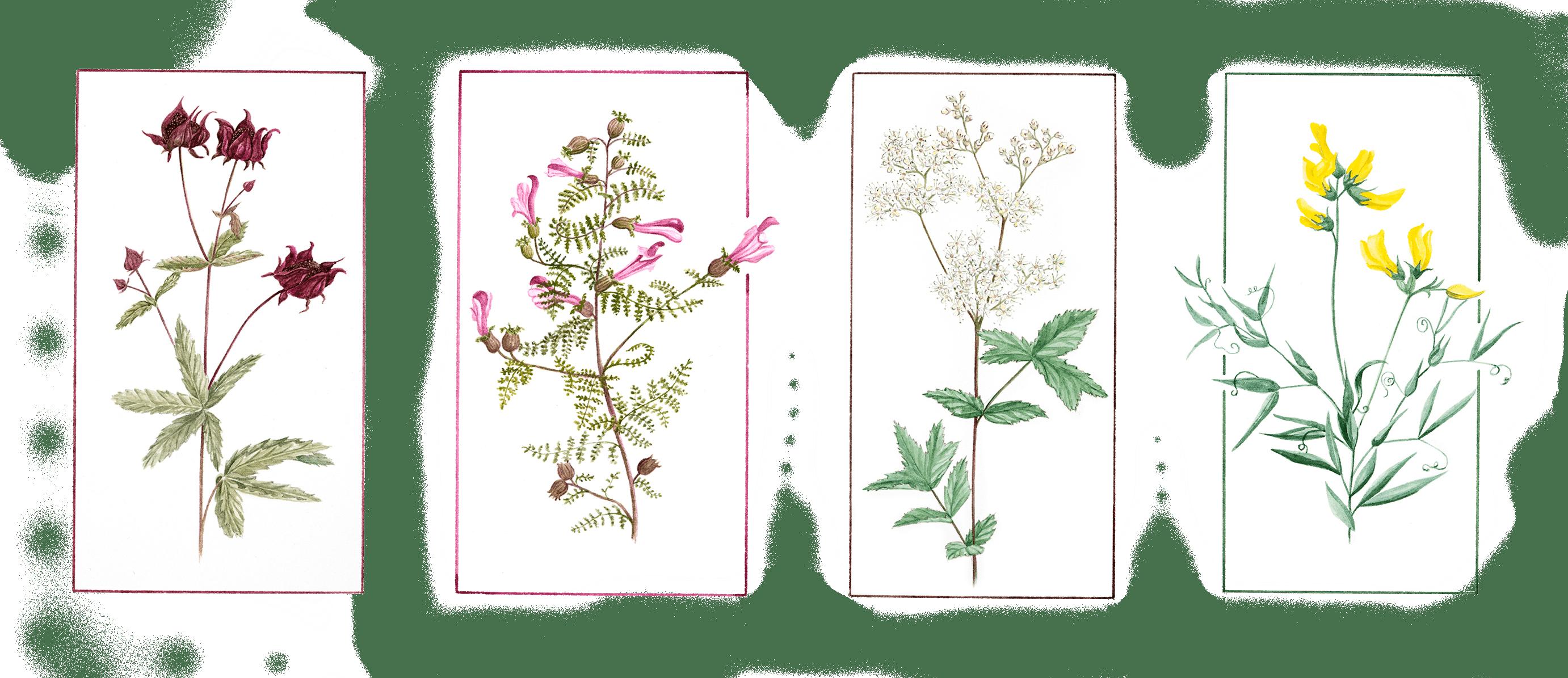 FlowersGrouped01