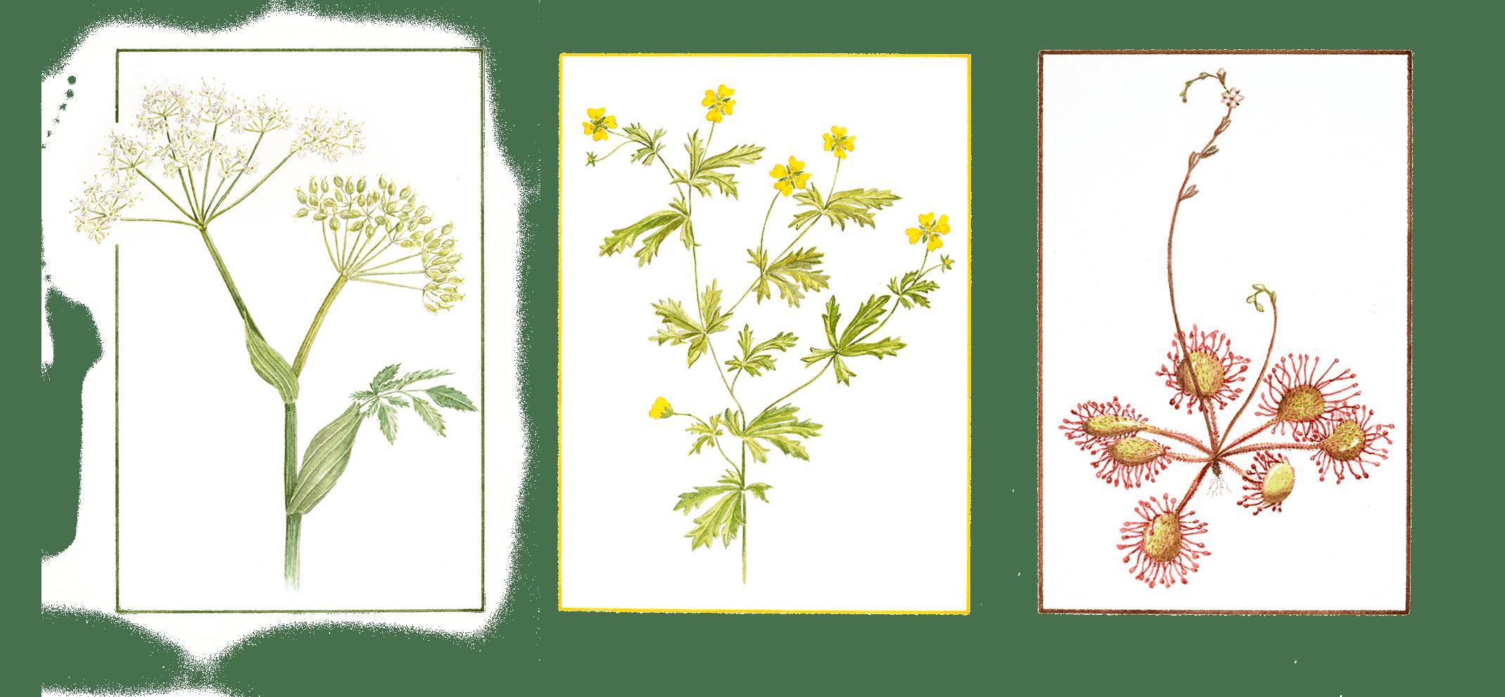 FlowersGrouped02